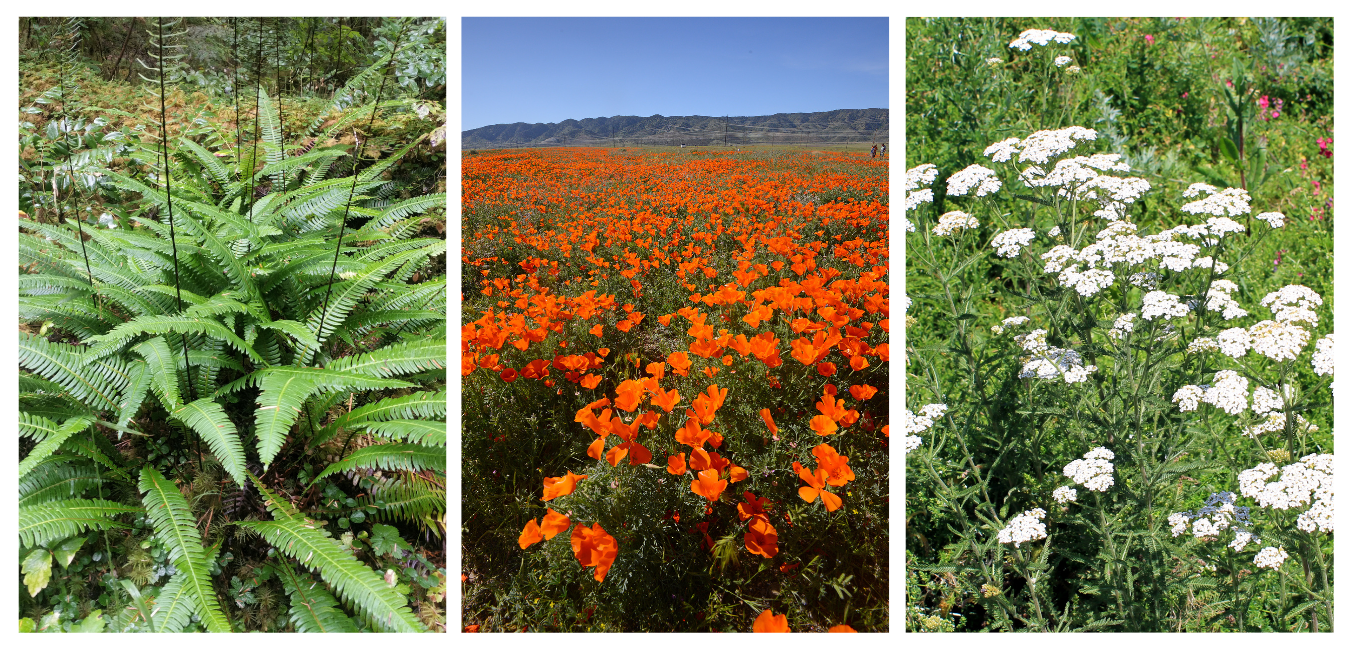 native plant gardening