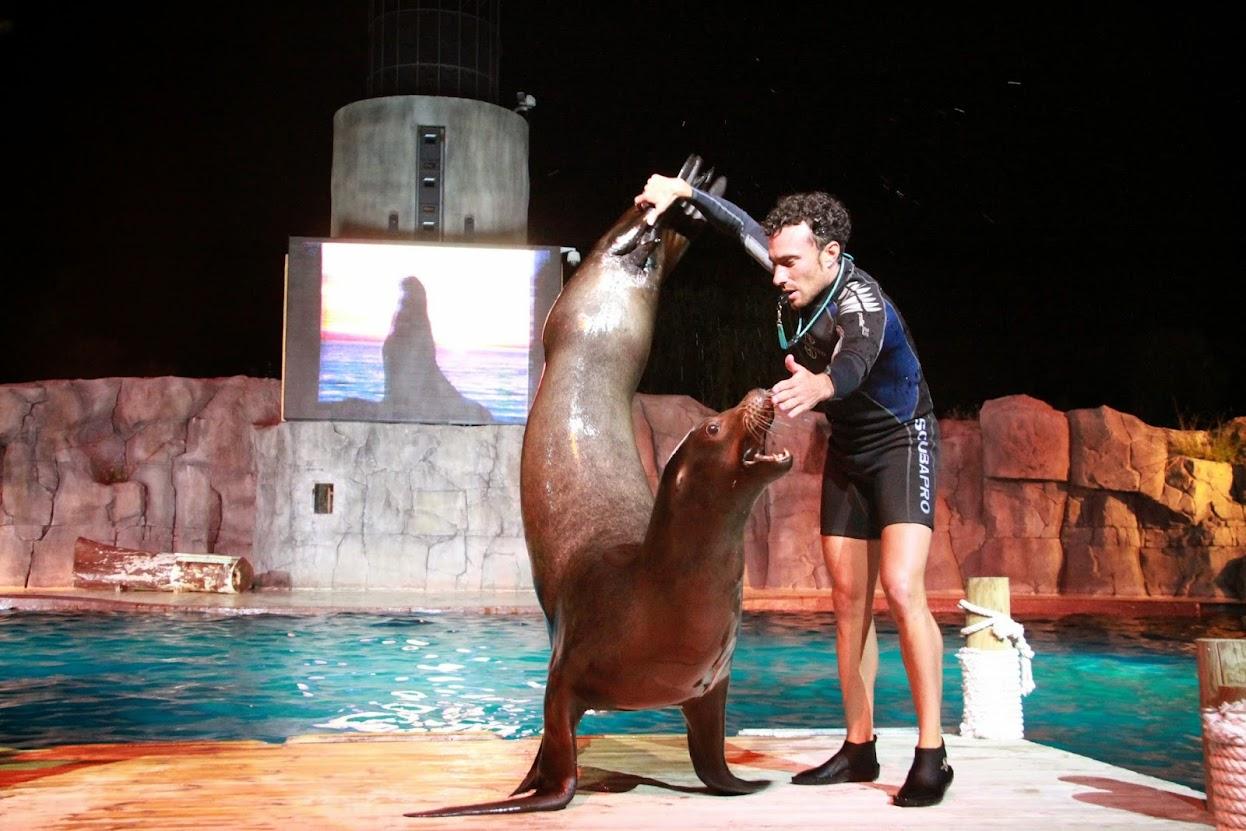 faunia de noche león marino
