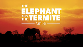 The Elephant and the Termite thumbnail