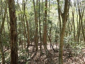 細い木々の間を抜ける