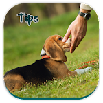 Tips For Dog Potty Training