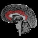 NeuroSlice icon