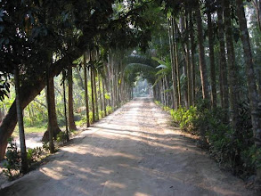 Photo: The picturesque densely wooded entrance walkway to the Angan