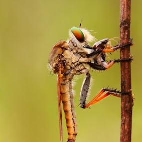 MAKAN by B Iwan Wijanarko - Animals Insects & Spiders