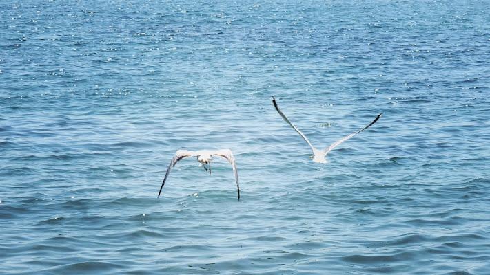 volo sul mare di Fabri192020