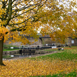Autumn on the canal by Darrell Evans - City,  Street & Park  City Parks ( autumnal, green, flora, walkway, crossing, locks, water, stone, outdoor, path, fall, leaves, grass, autumn, bridge, canal, no people, landscape )