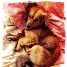 Photo: Pet resting... #intercer #pet - via Instagram, http://instagr.am/p/LFIGc4pfnu/