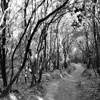 luci e ombre nel bosco di