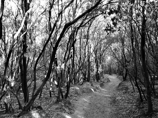 luci e ombre nel bosco di luciano55