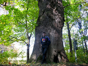 Photo: Дуб Богатир. Бережанський дендропарк в с.Рай