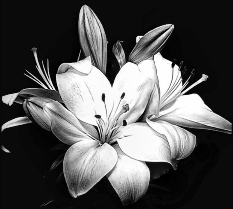 Primavera in b&w di lilith_triplice_exoterica