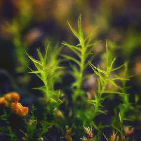 Moss by Juliusz Wilczynski - Nature Up Close Leaves & Grasses