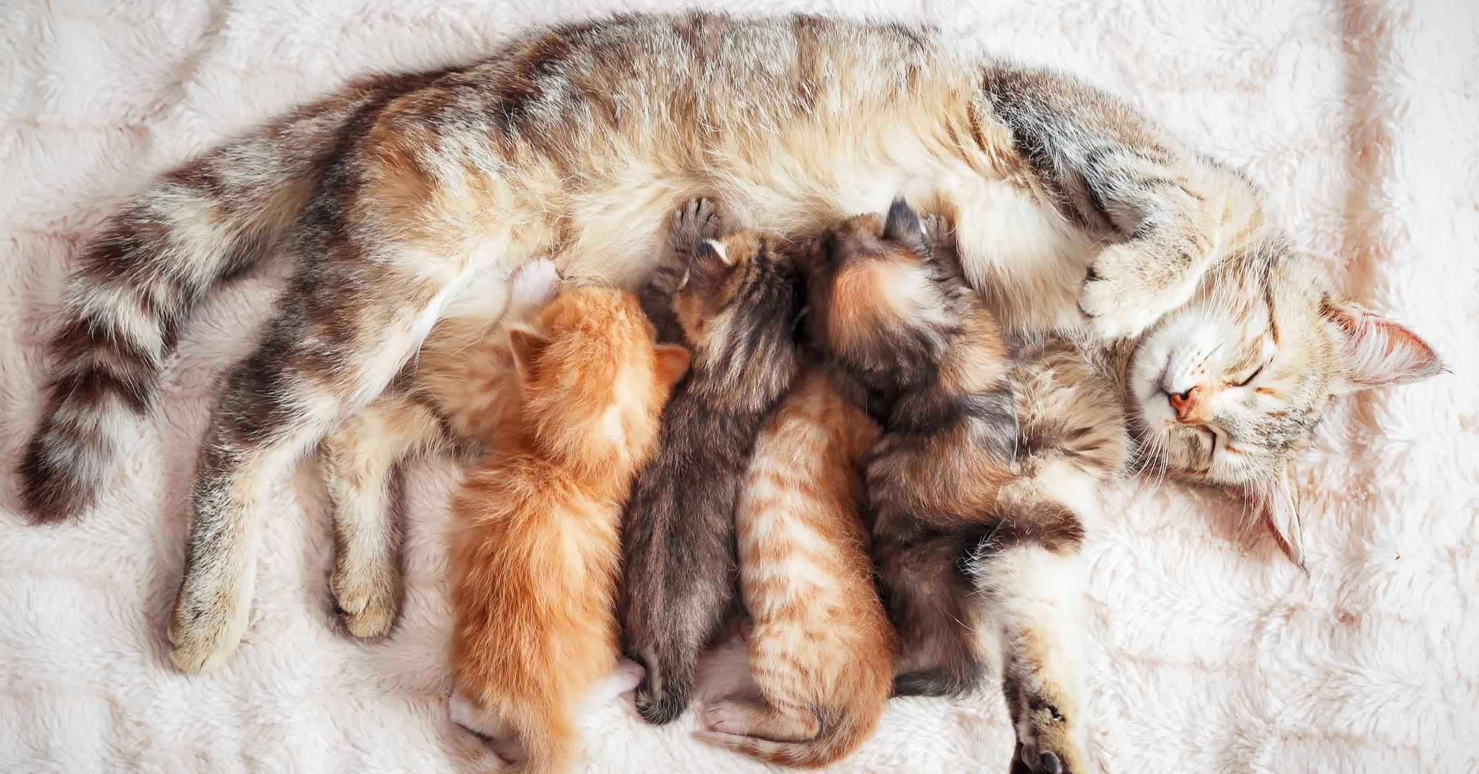 cute kittens nursing