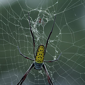 by Harry Musadi - Nature Up Close Webs