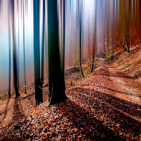 Autumn Day by Jaro Miščevič - Landscapes Forests