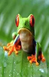 Frog Scratch Card for Kids screenshot 0