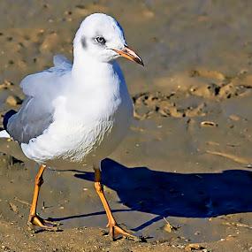 Bird by Jane Fourie - Animals Birds ( bird shots, bird, nature, wildlife, bird photography,  )