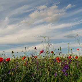 *** by Adriana Petcu - Flowers Flowers in the Wild ( blue sky, sky, red, nature, flowers )