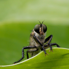 by OL JA - Animals Insects & Spiders