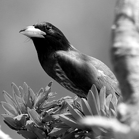 by Vivek Sharma - Black & White Animals ( bird, beauty of nature, vivekclix, animals, b&w, nature, black and white, bright, vivek,  )