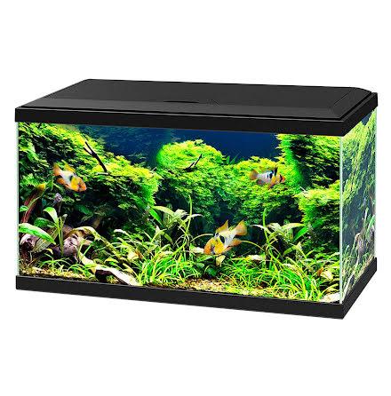 Ciano Svart Aquarium 60