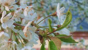 fleurs-de-printemps-a-la-ferme-du-tertre