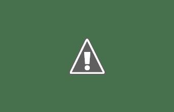 Photo: Think it is likely a Treecreeper bird