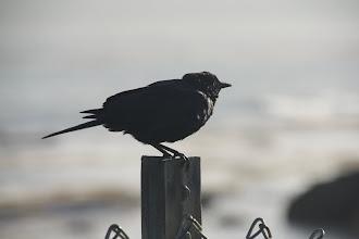Photo: fat bird