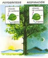fotosintesis y respiracion.jpg