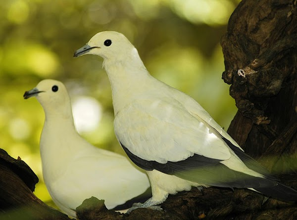 Two Turtledoves = the Old and New Testaments