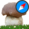 Mushroom Identify - Automatic picture recognition