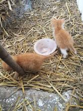 Photo: Kittens at Kraus