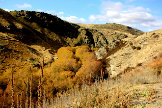 Photo: (Year 2) Day 303 - Autumnal Trees Alongside the River in the Gorge