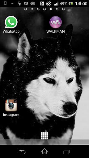 Wolf 3D Live Wallpaper