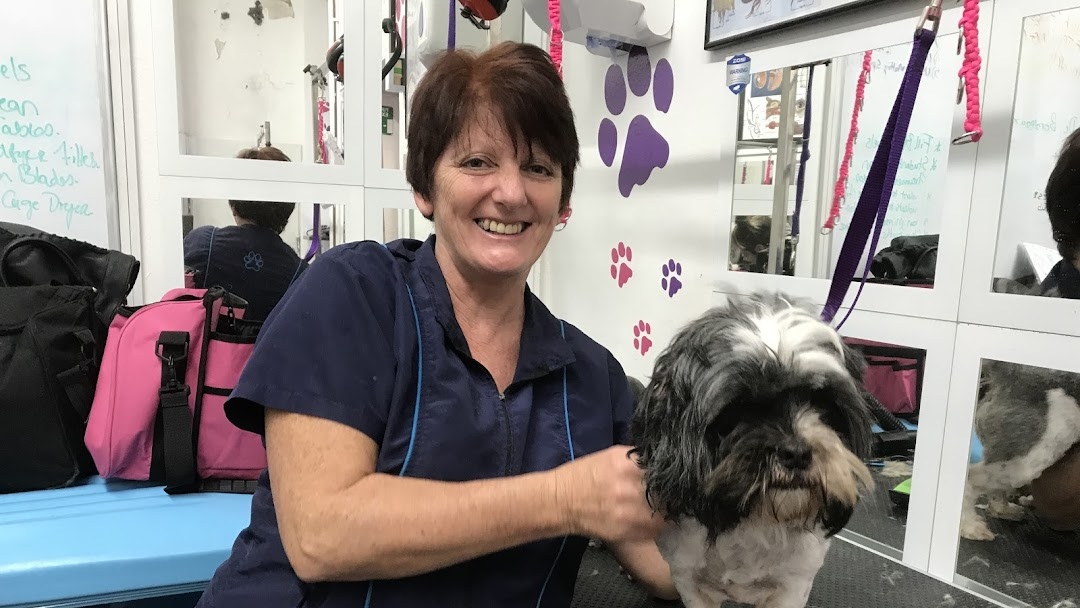 Scruffy 2 Fluffy Dog Grooming School Dog Grooming Service