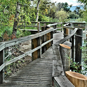 Nature walk Pathway by Don Mann - City,  Street & Park  City Parks ( skyline, photograph, seasonal, don, beach, boardwalk, beaches, sky, nature, tree, seas, shadow, weather, walkway, sunshine, bc, british columbia, canada, colors, art, white, lake, osoyoos, outdoors, peachland, canadian, okanagan valley, kelowna, mann, natural, shore, land, summerland, beauty, landscape, cute, pretty, digital, drawing, photography, tranquil, mountains, classic, man, water, abstract, clouds, sand, peaceful, park, boats, beautiful, scenic, sailboat, penticton, blue, background, south, scenery )