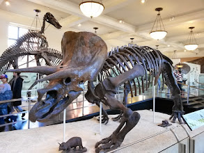 Photo: 70 miljonit aastat tagasi nägi elu teistmoodi välja