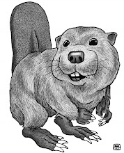 Photo: Beaver Study: Pen & Ink + Wash