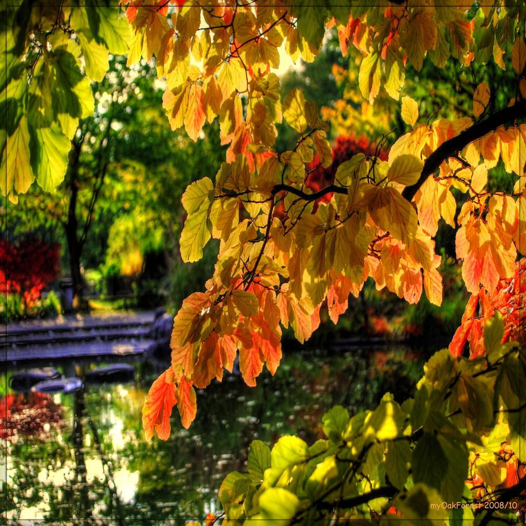 munich in autumn