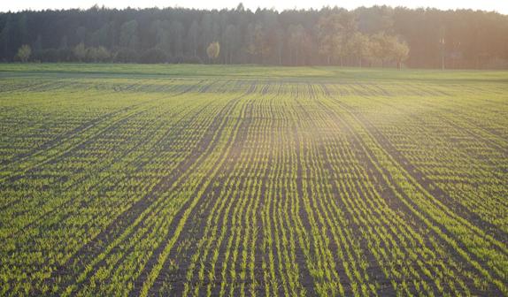 Trabajá en las mejores épocas de siembra y cosecha en Argentina