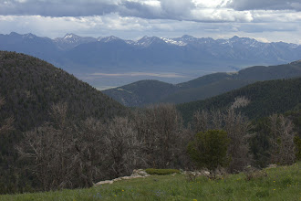 Photo: View of the Madison Range from the Gravelys over dead whitebark pines
