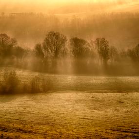 Foggy sunrise by Maurizio Martini - Landscapes Sunsets & Sunrises ( backlight, fog, sunny, ray of light, sunrise, sun, country, #GARYFONGDRAMATICLIGHT, #WTFBOBDAVIS,  )