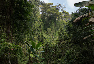 Photo: Back in Thailand. Adrienne and Stephen are professional ornithologists, and they specifically wanted to explore Southeast Asia's upland rain forests. This is Doi Suthep-Pui National Park, near the northern city of Chiang Mai. Resuming use of the Sony NEX-7.