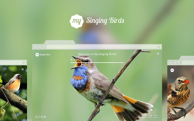 My Singing Birds HD Wallpaper New Tab Theme