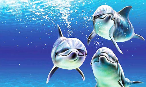 Dolphins Live Wallpaper  screenshots 5