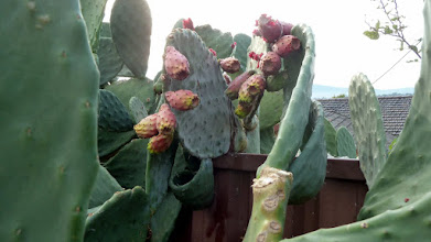 Photo: Prickly Pear Kaleen