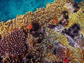 Photo: underwater scenery, Koh Chabang
