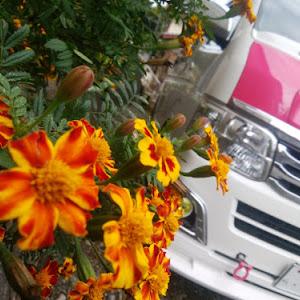 ハイエースバン TRH200Vのカスタム事例画像 シュナ 🐾🐶🐾CT2期生さんの2020年10月22日02:40の投稿