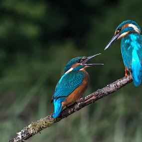 by Stephen Root - Animals Birds (  )