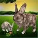 Simulador de coelho final para PC Windows